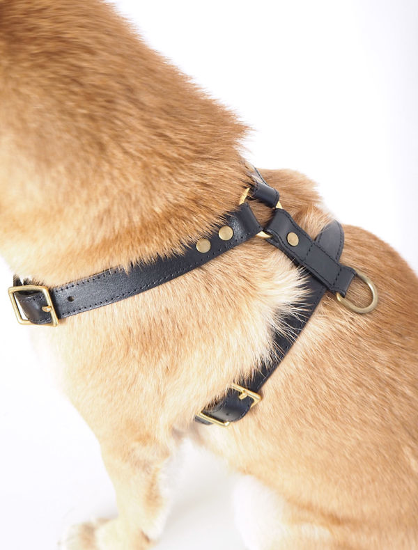 Quality leather dog harness